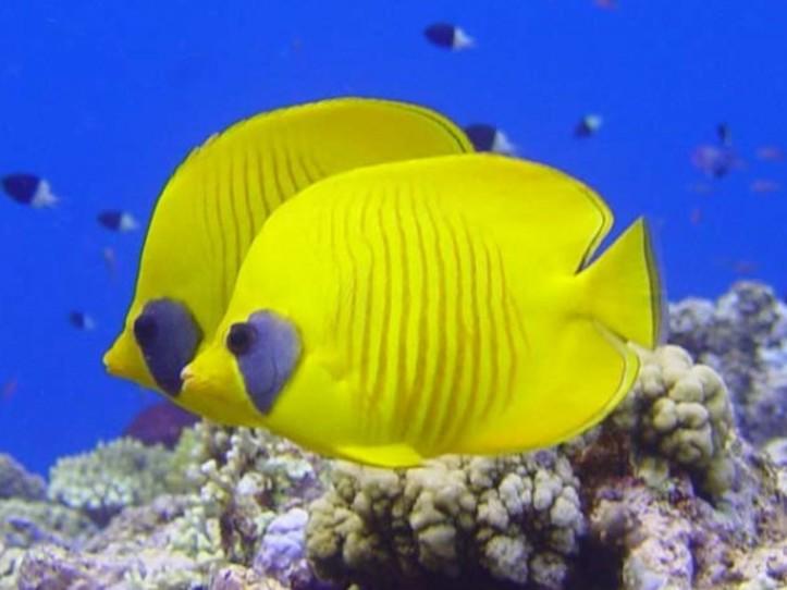Marine Eco System Awareness Diver